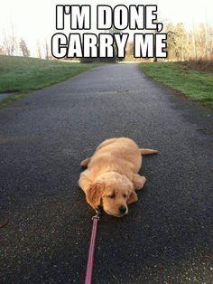 I had an 80lb foster dog do this to me once haha!!  Remember Rahli, Manda?! @Amanda W.
