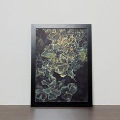 Nature photography botanical prints nature by BonVoyageStudio