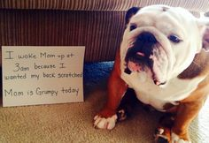 ❤ What ever it takes to make the baby happy ❤ Posted on Baggy Bulldogs