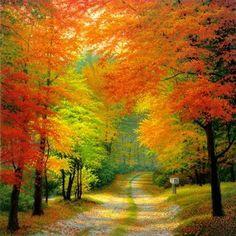 Fall Drive ...