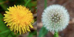 The Five Healthiest Backyard Weeds