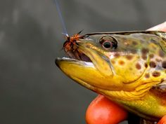 The little things matter too. #SeeWhatsOutThere #Trout #FlyFishing #KeepEmWet