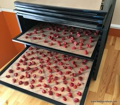 During the harvest season, the easiest way to preserve sour cherries is to pop the pitted cherries in the freezer. However, dried cherries have a lot of uses. Here's how to dehydrate frozen cherries for a sweet treat.