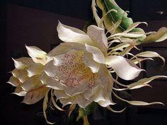 Традиционная сучжоуская вышивка — драгоценная живопись шелком по шелку - Ярмарка Мастеров - ручная работа, handmade