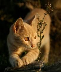 cats photography - Google Search