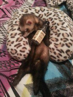 Funny ferret photo