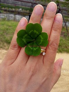 Finding a Lucky Four Leaf Clover!