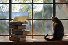 Pretty much my 3 favorite things:  a cat, a book, a window (and window sill)