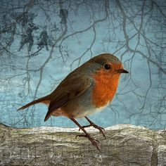 LOVE THE CLOURS OF THE ROBINS