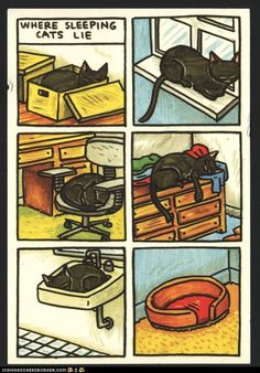So true. My cats usually ignore all their kitty beds., find more funny cat stuff here http://www.funnycatsblog.com