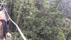 Crossing the Canopy Bridge in Nyungwe National Park-Rwanda