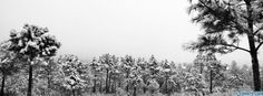 snowy trees facebook cover