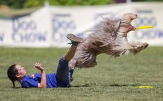 A dog catches a Frisbee during the Flydogs Extreme Distance Frisbee European Championships held in Budapest, Hungary