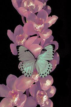 duxuebing:Photography by Xuebing Du Aesthetic Iphone Wallpaper, Aesthetic Wallpapers, Wallpaper Backgrounds, Flower Aesthetic, Aesthetic Art, Photo Wall Collage, Collage Art, Whats Wallpaper, Butterfly Wallpaper Iphone