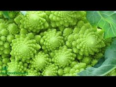 Fight Cancer: Chew (or Juice) Brassicas! - Integrative Oncology Essentials