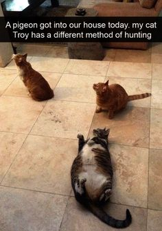 Magnificent -> Funny Cat Pictures Birthday ;D