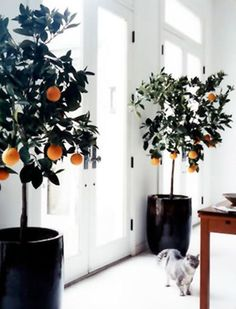 7+Houseplants+You+Absolutely+Can't+Kill+via+@PureWow