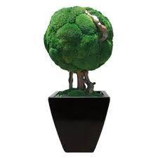 Image result for moss art garden kokedama