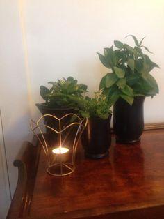 Nytt liv til gamle potter med spray (lisewolden) Live, Plants, Inspirational, Plant, Planets