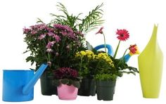 Home Remedies to Revive Dying Plants