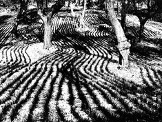 Mario Giacomelli A Level Photography, Film Photography, Street Photography, Landscape Photography, Monochrome Photography, Black And White Photography, Mario, Opt Art, Surrealism Photography
