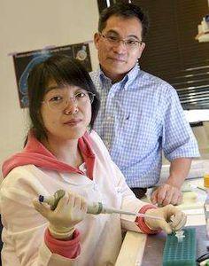 UT Southwestern researchers amplify regeneration of spinal nerve cells