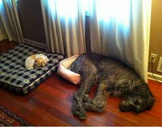At least keep your bottom warm. | 17 Dogs That Need A Bigger Bed