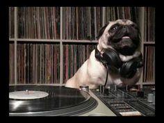 "Pug Listening To Cat Stevens' ""Was Dog A Doughnut"" Remix - YouTube"