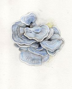 dessin champignons d'arbre, crayons de couleur, 2013