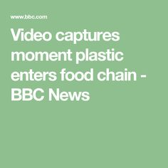 Video captures moment plastic enters food chain - BBC News