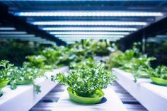 Grow more indoors with high-quality indoor LED grow lights for plants. From fruits and vegetables to herbs and trees, this buying guide from the Home Depot will explain the types of LED lights for growing plants in your home. Indoor Grow Lights, Best Led Grow Lights, Aquaponics System, Agriculture Verticale, Aquaponique Diy, Indoor Vegetable Gardening, Container Gardening, Gardens, Vegetable Gardening