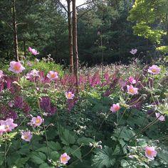 "23 Likes, 1 Comments - Sean McGeachy (@mcgeachygardendesign) on Instagram: ""Anemones x hybrida, Astilbe Purpurlanze #gardendesign #gardenlife #gardenstyles #planting…"""