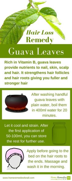 Guava leaves are very effective home remedy to stop hair loss and to regrow lost hair.