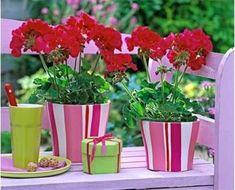 Вырастить герань можно и из семян, но я предпочитаю черенкование, которое проводится с середины февраля до начала марта.В это время уже требуется производить ...