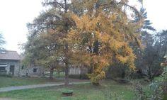 Jour d automne