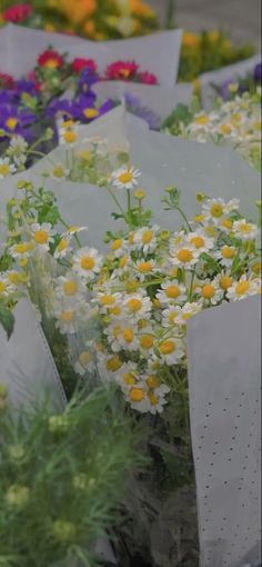 Jimin, Herbs, Flowers, Plants, Pictures, Wallpapers, Photos, Florals, Photo Illustration