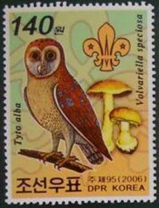 Western Barn Owl (Tyto alba), Big Sheat Mushroom (Volvariell