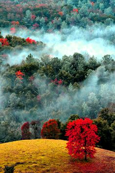 Spots of Autumn