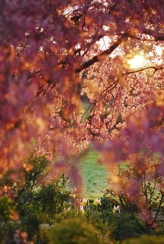 Spring, Craigeburn, New Zealand