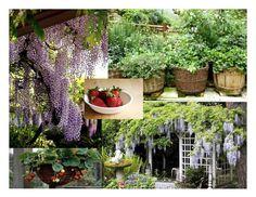 Trellis, Google Images, Plants, Flora, Plant, Planting, Pergolas