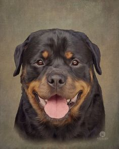 Rottweiler by TimWempleArtGallery on Etsy