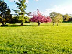 onscreenphotos' photostream Golf Courses, Sidewalk, Backyard, Explore, Nature, Cat, Patio, Naturaleza, Cat Breeds