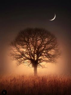 Scenery Tree of Life Beautiful Moon, Beautiful World, Beautiful Images, Foto Picture, Photo Tree, Lone Tree, Good Night Moon, Misty Night, Tree Lighting