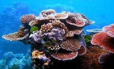 3/4 of the worlds coral reefs are threatened by agricultural run off.