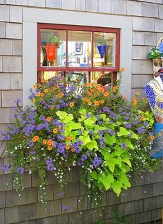 WINDOW BOX ::  Calibrachoa (orange), sutera cordata (white), scaevola hybrid (blue), and Ipomea Marguerite (Sweet potato vine) by georgette