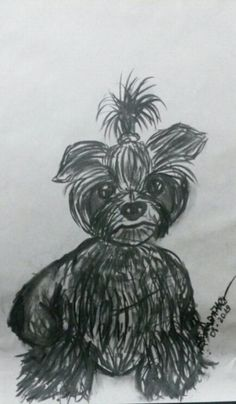 ♡ #Drawing #Charcoal #Draw #Carvao #Desenho #Diseno #Dibujo #Dog ♥