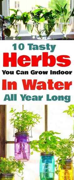 Make Your Own Indoor Herb Garden With These Tasty Herbs You Can Grow Indoor In Water Right Through The Year. Make Your Own Indoor Herb Garden With These Tasty Herbs You Can Grow Indoor In Water Right Through The Year. Hydroponic Gardening, Hydroponics, Organic Gardening, Container Gardening, Indoor Gardening, Herb Garden Indoor, Indoor Planters, Urban Gardening, Gardening For Beginners