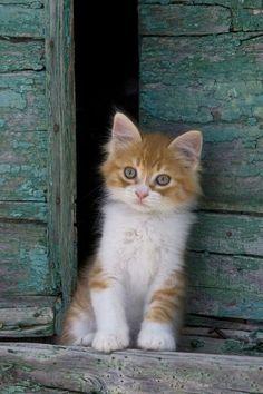 ♔ Le petit chat