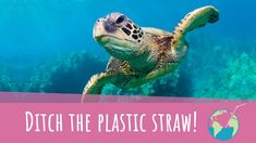 Sign the Petition Snoop Dogg, The Real World, Marine Life, Straws, Environment, Oceans, Plastic, Let It Be, Change Org