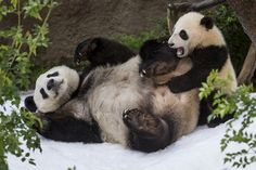 Mother and Son Playtime by Official San Diego Zoo, via Flickr